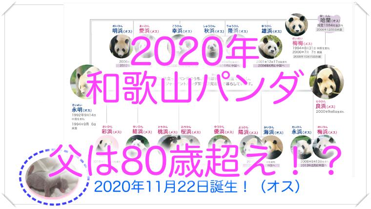 2020和歌山パンダ誕生!