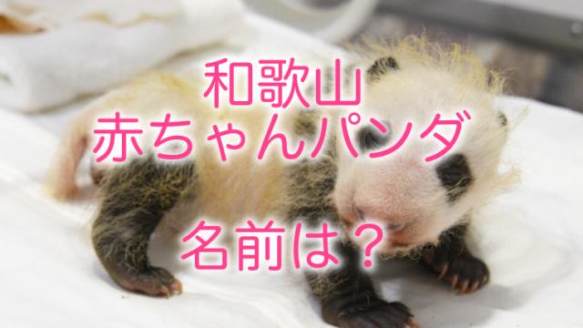 和歌山の赤ちゃんパンダの名前は?