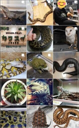 ペット禁止のアパートで爬虫類を大量飼育