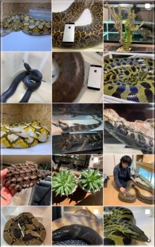 飼い主が他にかっていた爬虫類画像
