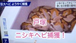 戸塚ニシキヘビ捕獲