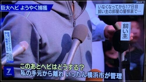 捕獲後のニシキヘビは横浜市が管理