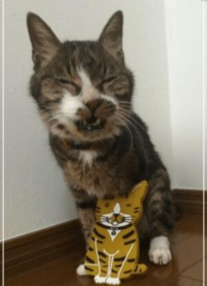 川上洋平の実家で買っていた猫・ミルクちゃん