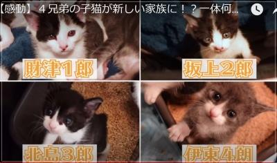 新入り猫 画像