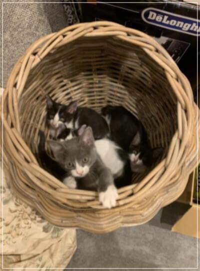 新入り猫 4匹 画像