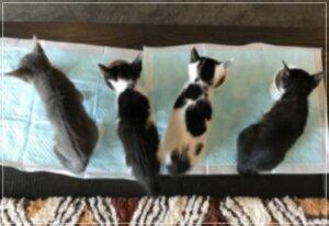 猫4匹 画像