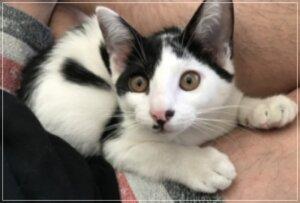 1郎 猫 画像