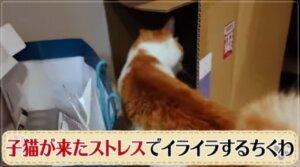 イライラする猫 画像
