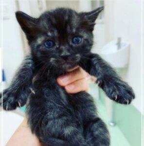 川上洋平の愛猫のソイ