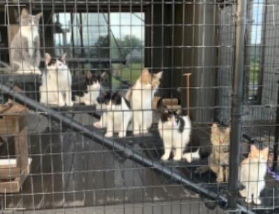 猫8匹集合 画像